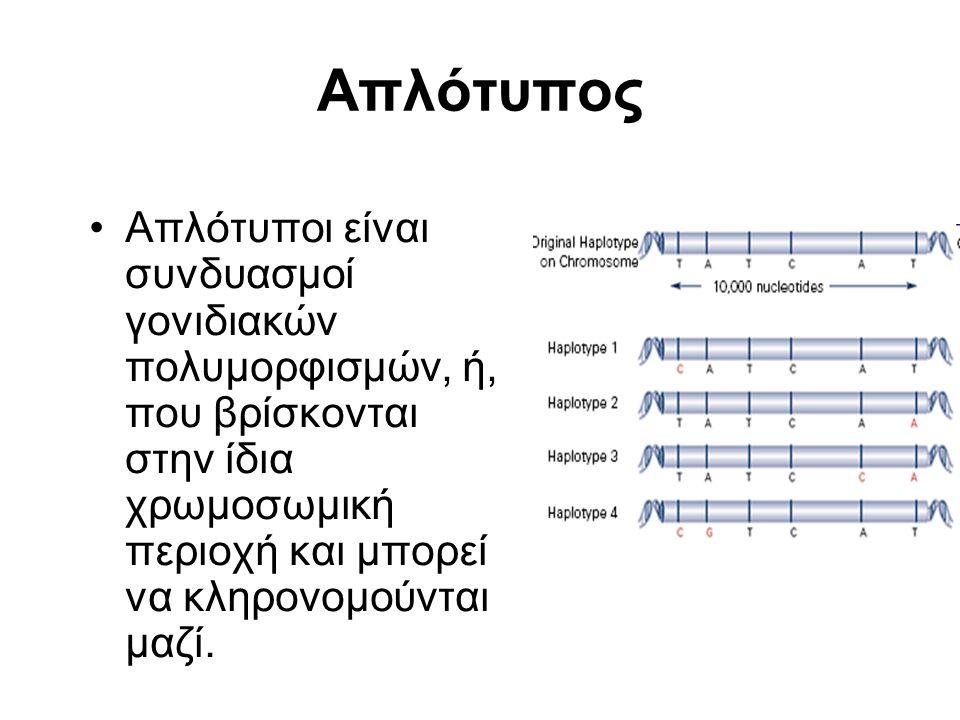 Απλότυπος Απλότυποι είναι συνδυασμοί γονιδιακών πολυμορφισμών, ή, που βρίσκονται στην ίδια χρωμοσωμική περιοχή και μπορεί να κληρονομούνται μαζί.