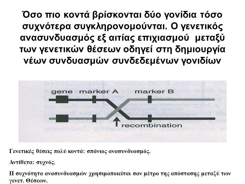 Όσο πιο κοντά βρίσκονται δύο γονίδια τόσο συχνότερα συγκληρονομούνται.
