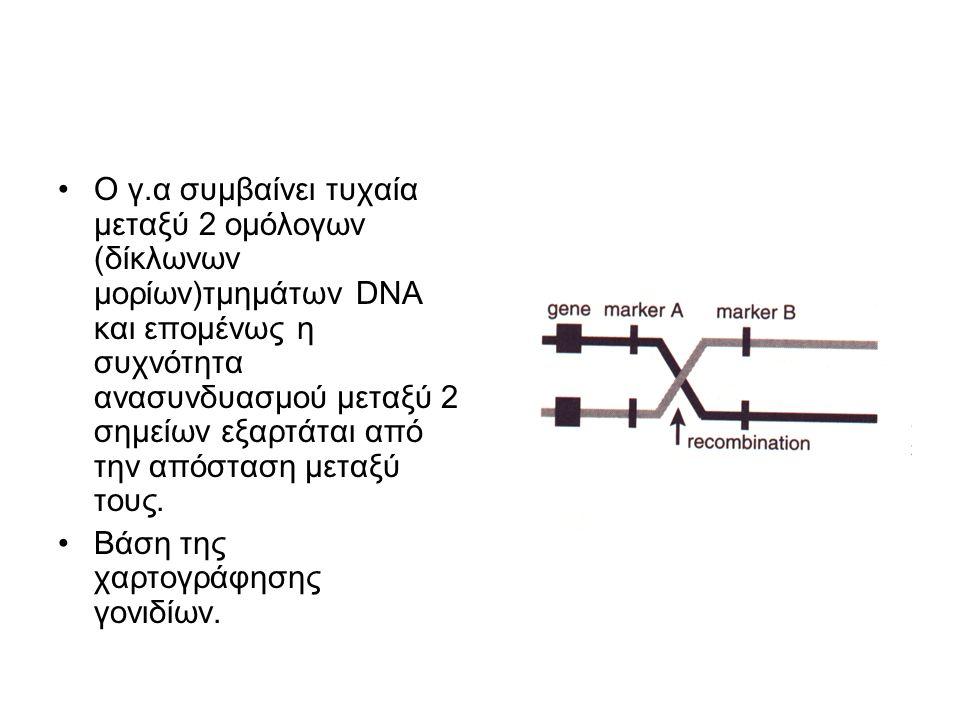 O γ.α συμβαίνει τυχαία μεταξύ 2 ομόλογων (δίκλωνων μορίων)τμημάτων DNA και επομένως η συχνότητα ανασυνδυασμού μεταξύ 2 σημείων εξαρτάται από την απόσταση μεταξύ τους.