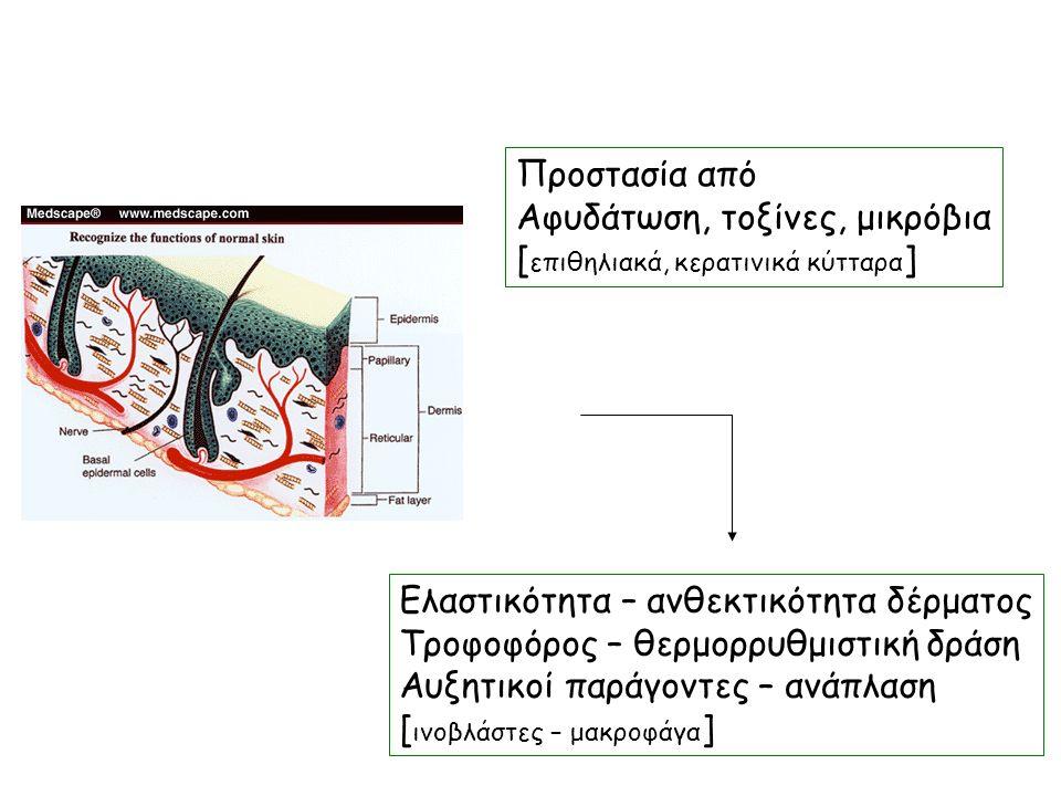 Προστασία από Αφυδάτωση, τοξίνες, μικρόβια [ επιθηλιακά, κερατινικά κύτταρα ] Ελαστικότητα – ανθεκτικότητα δέρματος Τροφοφόρος – θερμορρυθμιστική δράση Αυξητικοί παράγοντες – ανάπλαση [ ινοβλάστες – μακροφάγα ]