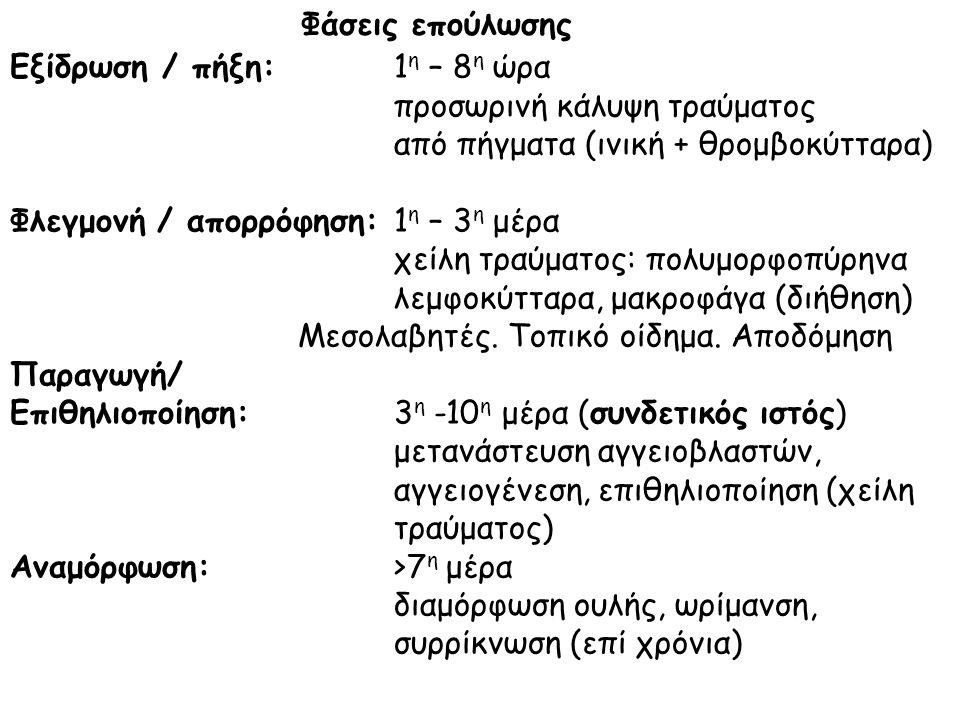 Φάσεις επούλωσης Εξίδρωση / πήξη:1 η – 8 η ώρα προσωρινή κάλυψη τραύματος από πήγματα (ινική + θρομβοκύτταρα) Φλεγμονή / απορρόφηση:1 η – 3 η μέρα χείλη τραύματος: πολυμορφοπύρηνα λεμφοκύτταρα, μακροφάγα (διήθηση) Μεσολαβητές.
