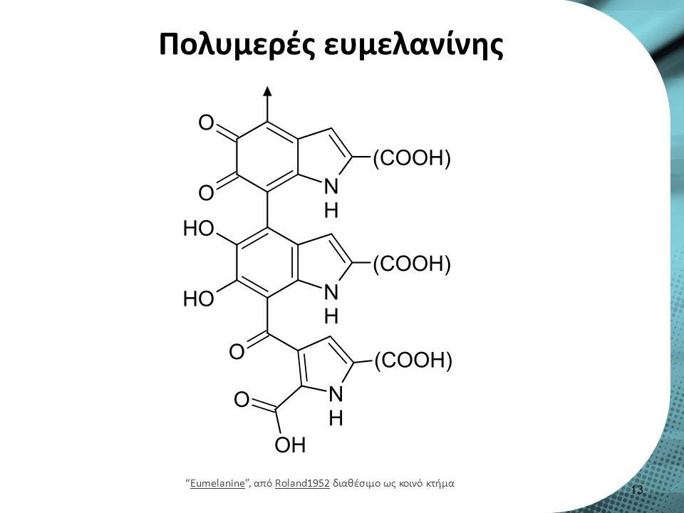 Πολυμερές ευμελανίνης 13 Eumelanine , από Roland1952 διαθέσιμο ως κοινό κτήμαEumelanineRoland1952