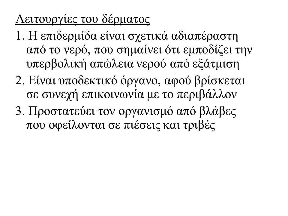 2) Οι ιδρωτοποιοί αδένες