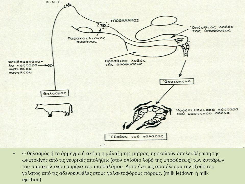 Ο θηλασμός ή το άρμεγμα ή ακόμη η μάλαξη της μήτρας, προκαλούν απελευθέρωση της ωκυτοκίνης από τις νευρικές απολήξεις (στον οπίσθιο λοβό της υποφύσεως) των κυττάρων του παρακοιλιακού πυρήνα του υποθαλάμου.