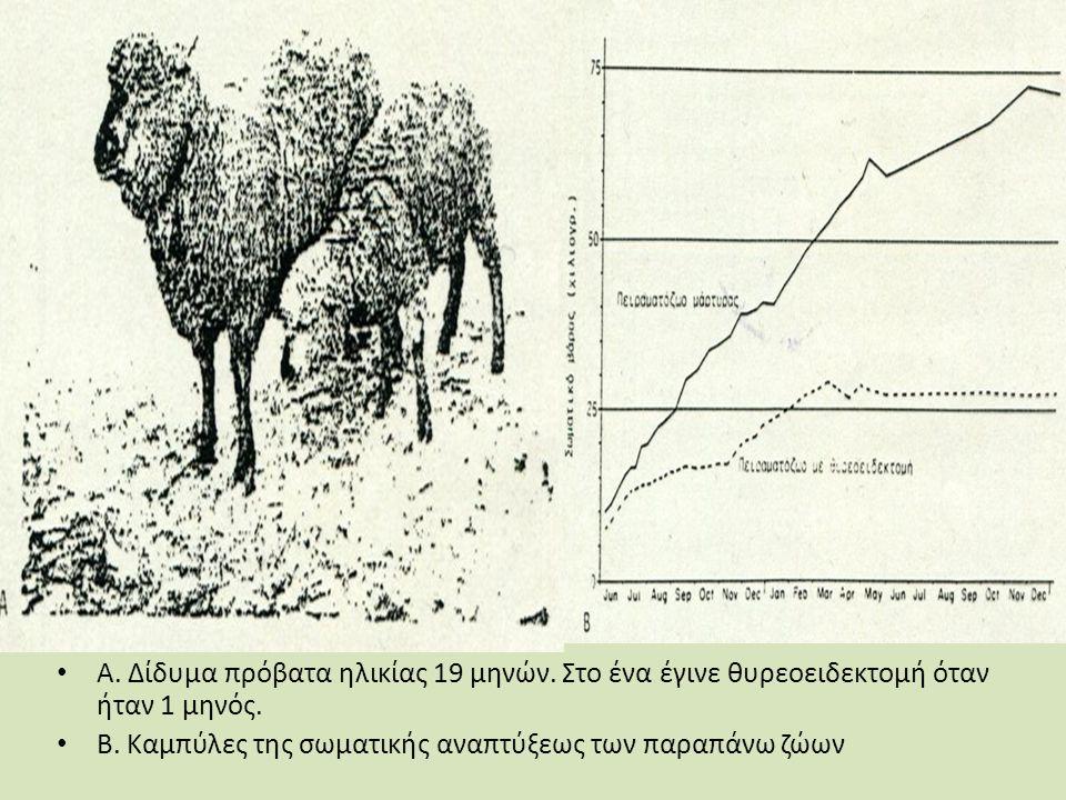 Α. Δίδυμα πρόβατα ηλικίας 19 μηνών. Στο ένα έγινε θυρεοειδεκτομή όταν ήταν 1 μηνός.
