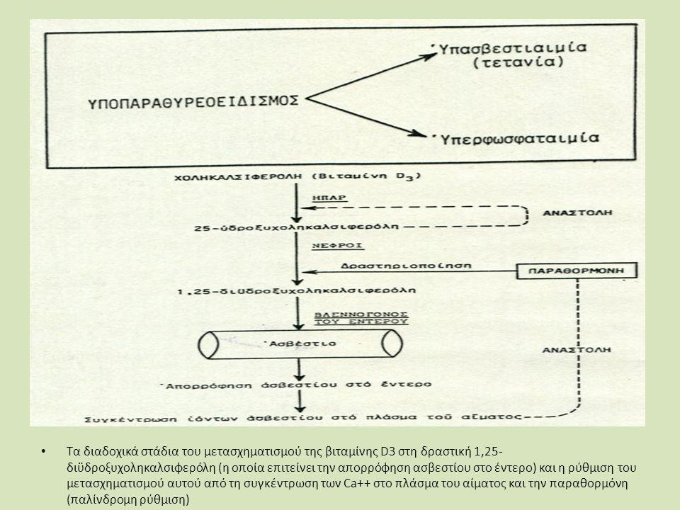 Τα διαδοχικά στάδια του μετασχηματισμού της βιταμίνης D3 στη δραστική 1,25- διϋδροξυχοληκαλσιφερόλη (η οποία επιτείνει την απορρόφηση ασβεστίου στο έντερο) και η ρύθμιση του μετασχηματισμού αυτού από τη συγκέντρωση των Ca++ στο πλάσμα του αίματος και την παραθορμόνη (παλίνδρομη ρύθμιση)