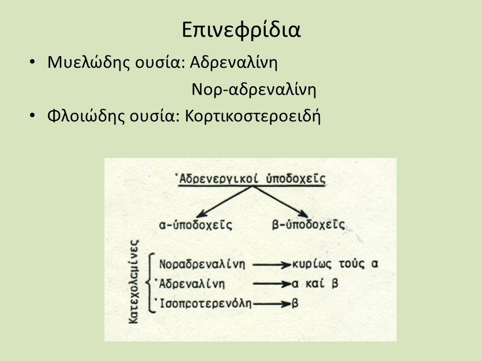 Επινεφρίδια Μυελώδης ουσία: Αδρεναλίνη Νορ-αδρεναλίνη Φλοιώδης ουσία: Κορτικοστεροειδή