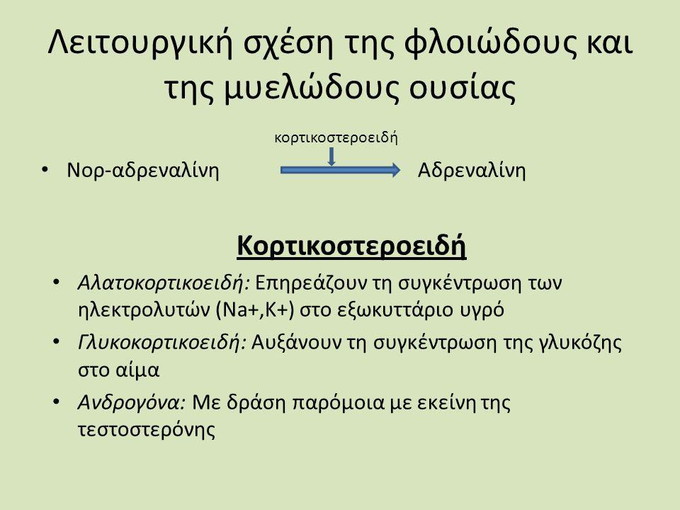 Λειτουργική σχέση της φλοιώδους και της μυελώδους ουσίας κορτικοστεροειδή Νορ-αδρεναλίνη Αδρεναλίνη Κορτικοστεροειδή Αλατοκορτικοειδή: Επηρεάζουν τη συγκέντρωση των ηλεκτρολυτών (Na+,K+) στο εξωκυττάριο υγρό Γλυκοκορτικοειδή: Αυξάνουν τη συγκέντρωση της γλυκόζης στο αίμα Ανδρογόνα: Με δράση παρόμοια με εκείνη της τεστοστερόνης