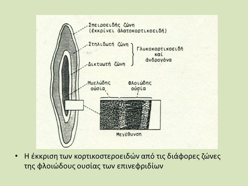 Η έκκριση των κορτικοστεροειδών από τις διάφορες ζώνες της φλοιώδους ουσίας των επινεφριδίων