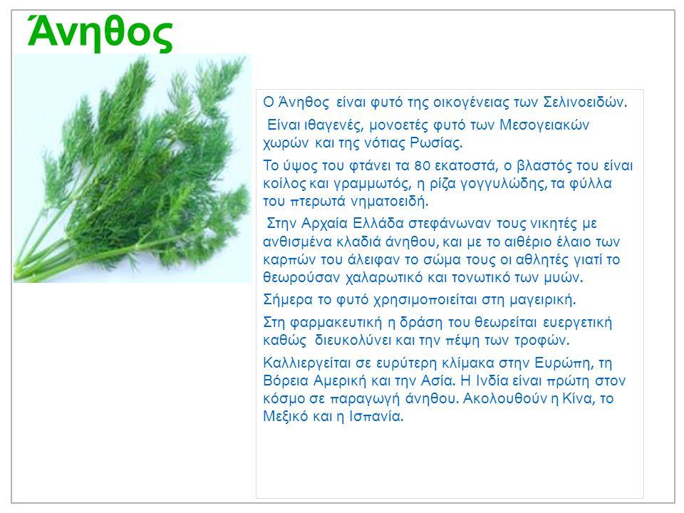 Άνηθος Ο Άνηθος είναι φυτό της οικογένειας των Σελινοειδών.
