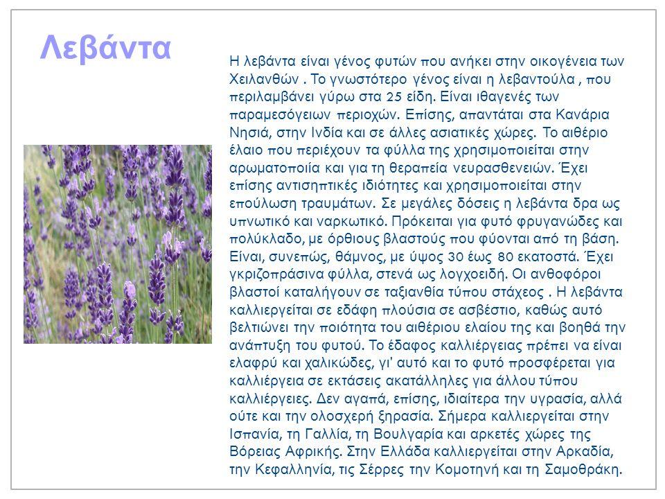 Λεβάντα Η λεβάντα είναι γένος φυτών π ου ανήκει στην οικογένεια των Χειλανθών.