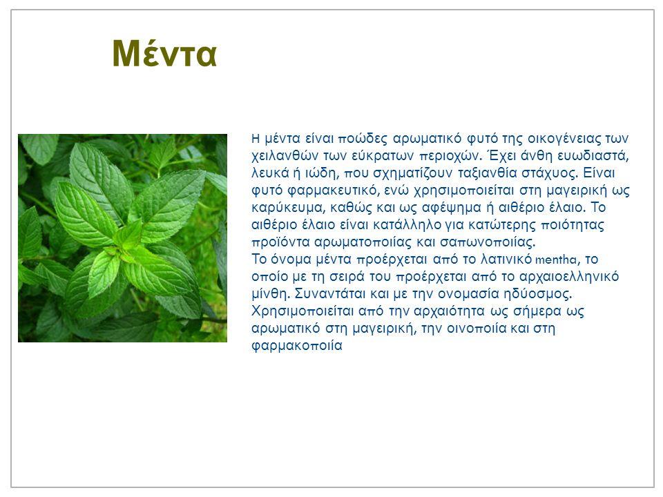 Μέντα H μέντα είναι π οώδες αρωματικό φυτό της οικογένειας των χειλανθών των εύκρατων π εριοχών.