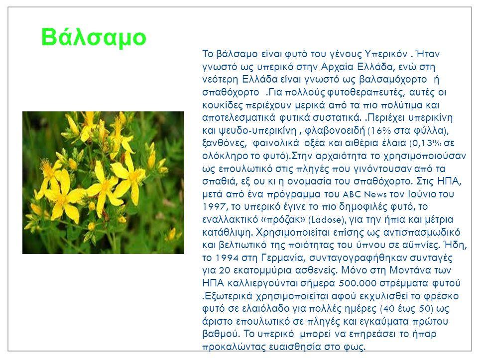 Μαϊντανός O μαϊντανός είναι διετές, ιθαγενές φυτό π ου ανήκει στο γένος Πετροσέλινον της οικογένειας των Σελινοειδών Καλλιεργείται στις εύκρατες π εριοχές για τα φύλλα του π ου χρησιμο π οιούνται στη μαγειρική και σε διάφορες σαλάτες.