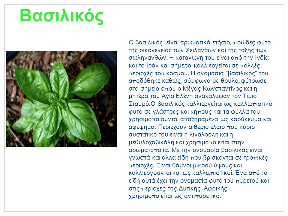 Βασιλικός Ο βασιλικός είναι αρωματικό ετήσιο, π οώδες φυτό της οικογένειας των Χειλανθών και της τάξης των σωληνανθών.