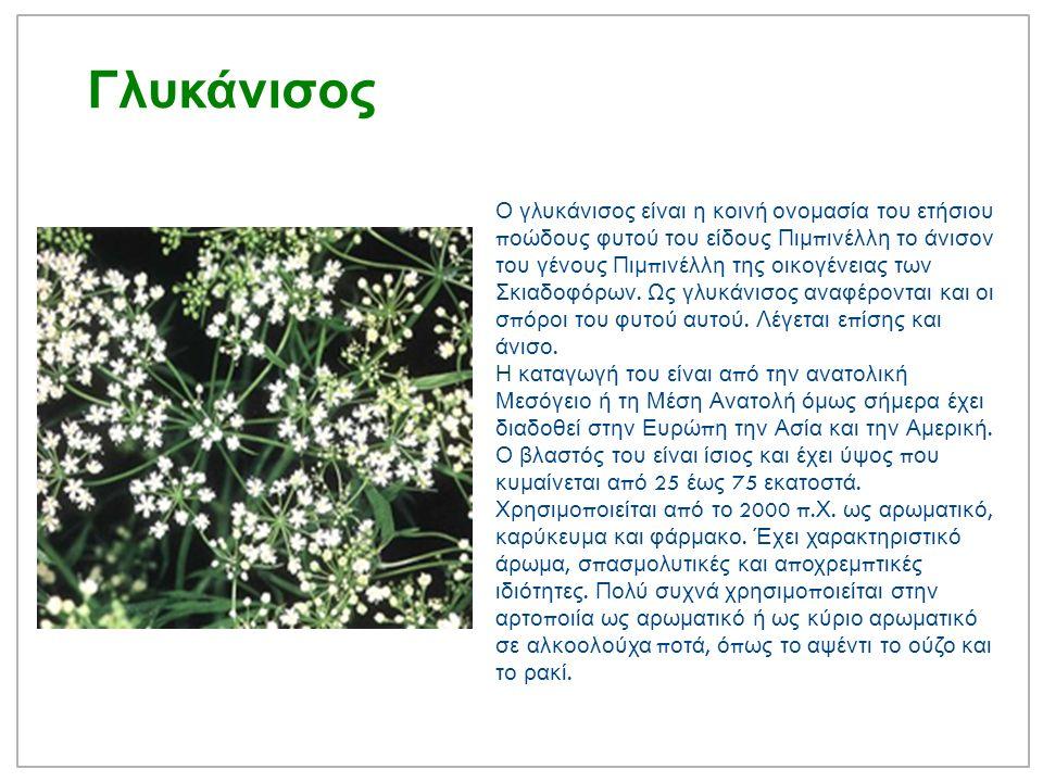 Ματζουράνα Ορίγανον η μαντζουράνα Αγγειόσ π ερμο, δικότυλο, π ολυετές φυτό η μαντζουράνα ανήκει στην τάξη λαμιώδη και στην οικογένεια χειλανθή, είναι δε συγγενικό φυτό με τη ρίγανη.