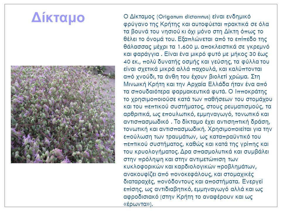 Ρίγανη Η ρίγανη είναι αρωματικό π οώδες, π ολυετές, ιθαγενές και θαμνώδες φυτό της Μεσογείου και της Κεντρικής Ασίας.