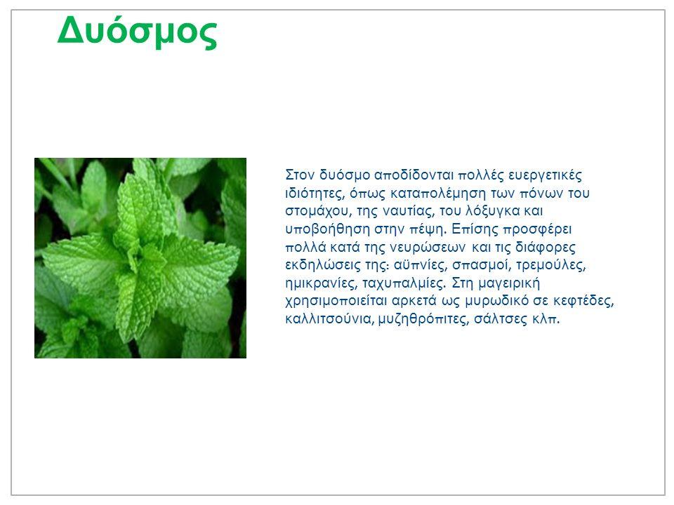 Σέλινο Αρωματικό φυτό γνωστό σε Έλληνες, Ρωμαίους και Κινέζους π ου το χρησιμο π οιούσαν στην μαγειρική και την φαρμακευτική.