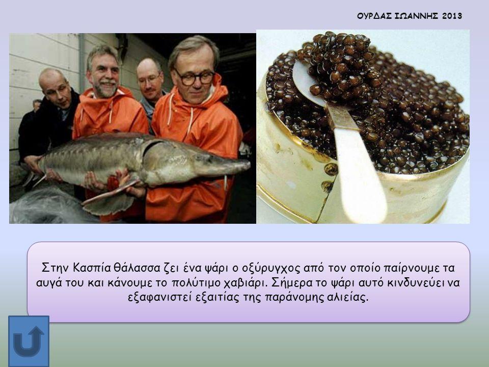 Στην Κασπία θάλασσα ζει ένα ψάρι ο οξύρυγχος από τον οποίο παίρνουμε τα αυγά του και κάνουμε το πολύτιμο χαβιάρι. Σήμερα το ψάρι αυτό κινδυνεύει να εξ
