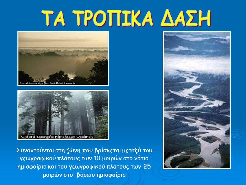 Συναντάται σε περιοχές που βρίσκονται σε γεωγραφικό πλάτος 15 – 25 μοιρών τόσο στο βόρειο όσο και στο νότιο ημισφαίριο