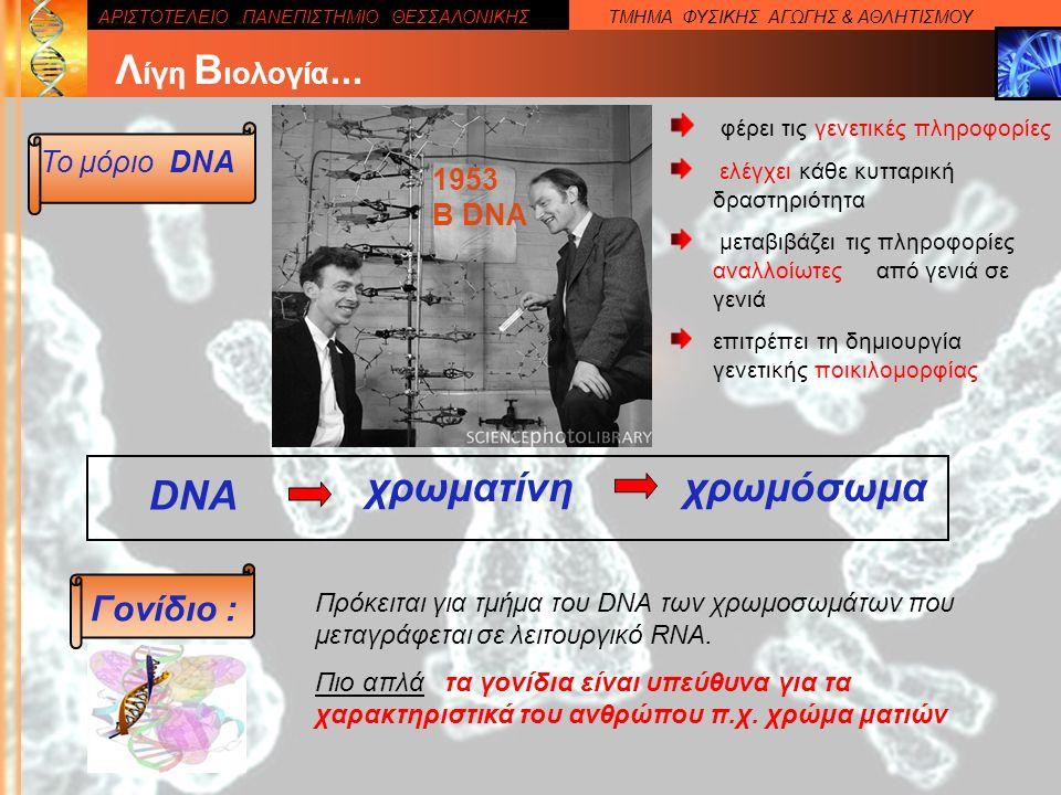ΑΡΙΣΤΟΤΕΛΕΙΟ ΠΑΝΕΠΙΣΤΗΜΙΟ ΘΕΣΣΑΛΟΝΙΚΗΣΤΜΗΜΑ ΦΥΣΙΚΗΣ ΑΓΩΓΗΣ & ΑΘΛΗΤΙΣΜΟΥ Το μόριο DNA Λ ίγη Β ιολογία...