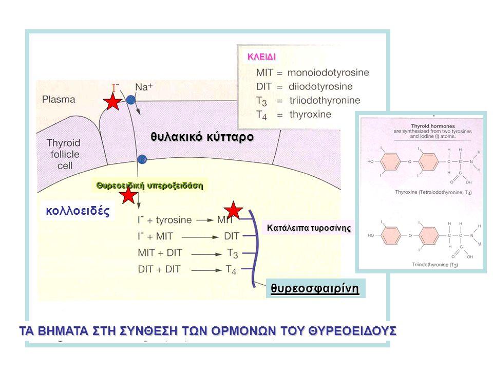 ΤΑ ΒΗΜΑΤΑ ΣΤΗ ΣΥΝΘΕΣΗ ΤΩΝ ΟΡΜΟΝΩΝ ΤΟΥ ΘΥΡΕΟΕΙΔΟΥΣ ΚΛΕΙΔΙ θυρεοσφαιρίνη Κατάλειπα τυροσίνης Θυρεοειδική υπεροξειδάση κολλοειδές θυλακικό κύτταρο
