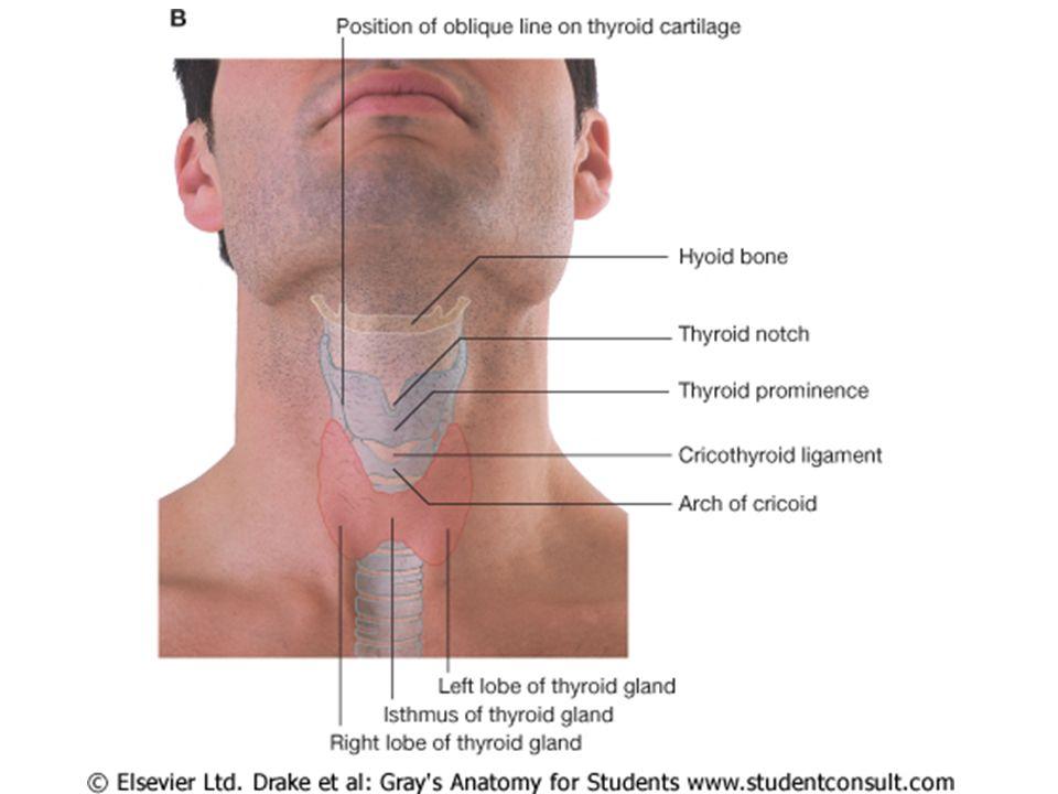 κολλοειδές θυρεοσφαιρίνη σύνθεση έκκριση