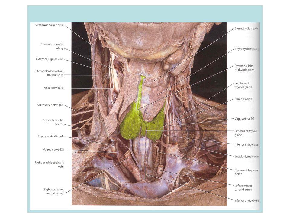 Φυσιολογικός Θυρεοειδής 0ζώδης βρογχοκήλη 10-30 gr Δεν ψηλαφάται εύκολα κατά την κλινική εξέταση