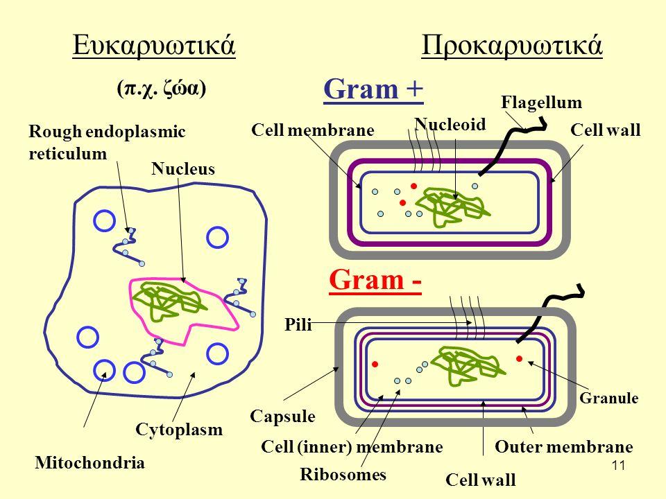 11 ΕυκαρυωτικάΠροκαρυωτικά Gram + Gram - Cell wall Rough endoplasmic reticulum Mitochondria (π.χ. ζώα) Nucleoid Nucleus Cell membrane Cytoplasm Flagel