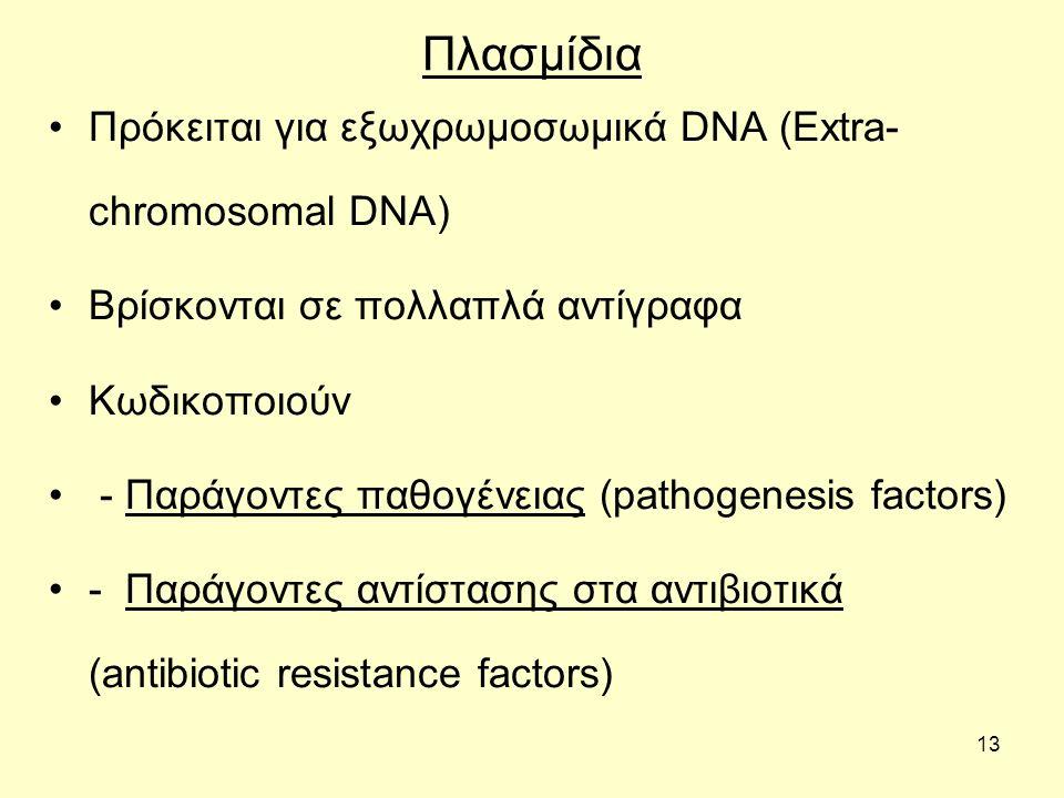 13 Πλασμίδια Πρόκειται για εξωχρωμοσωμικά DNA (Extra- chromosomal DNA) Βρίσκονται σε πολλαπλά αντίγραφα Κωδικοποιούν - Παράγοντες παθογένειας (pathoge