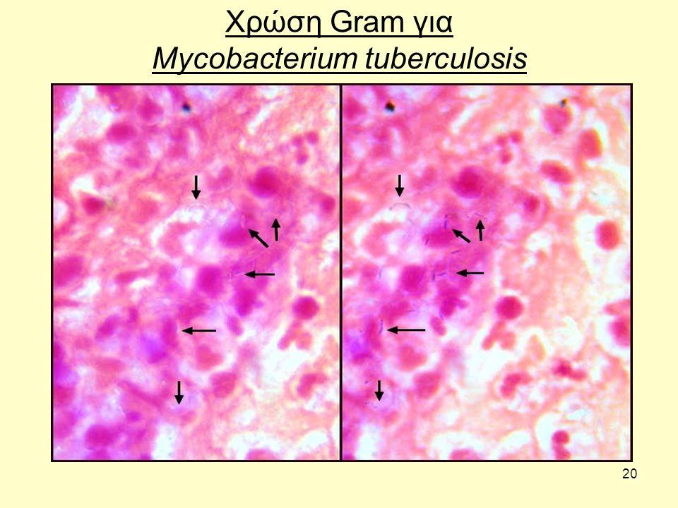 20 Χρώση Gram για Mycobacterium tuberculosis