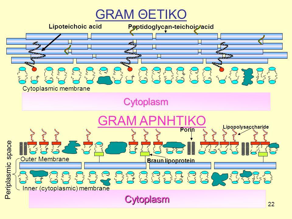 22 GRAM ΘΕΤΙΚΟ GRAM ΑΡΝΗΤΙΚΟ Cytoplasm Cytoplasm Lipoteichoic acid Peptidoglycan-teichoic acid Cytoplasmic membrane Inner (cytoplasmic) membrane Outer