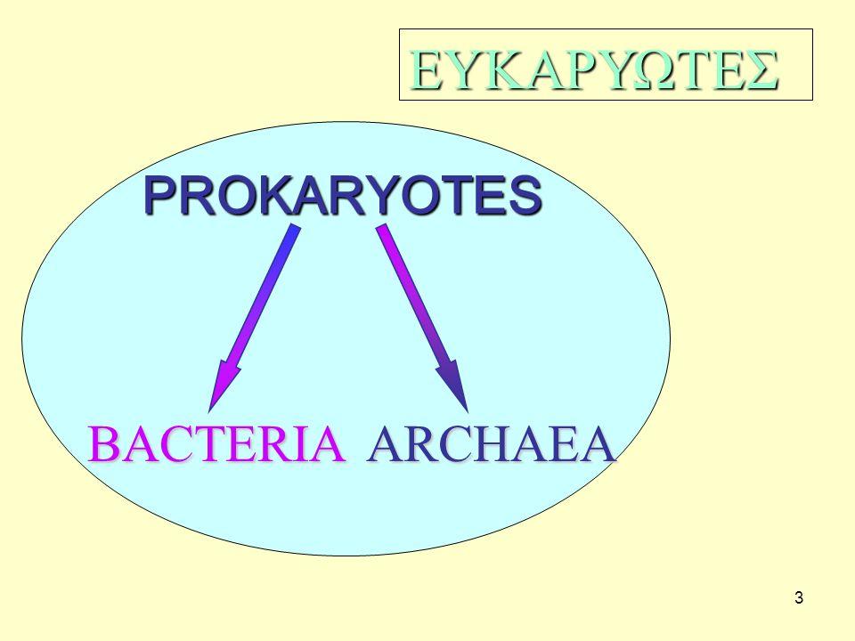 44 Παραλλαγές στη μορφολογία των ενδοσπορίων: (1, 4) κεντρικά ενδοσπόρια, (2, 3, 5) τερματικά ενδοσπόρια, (6) πλευρικά ενδοσπόρια.