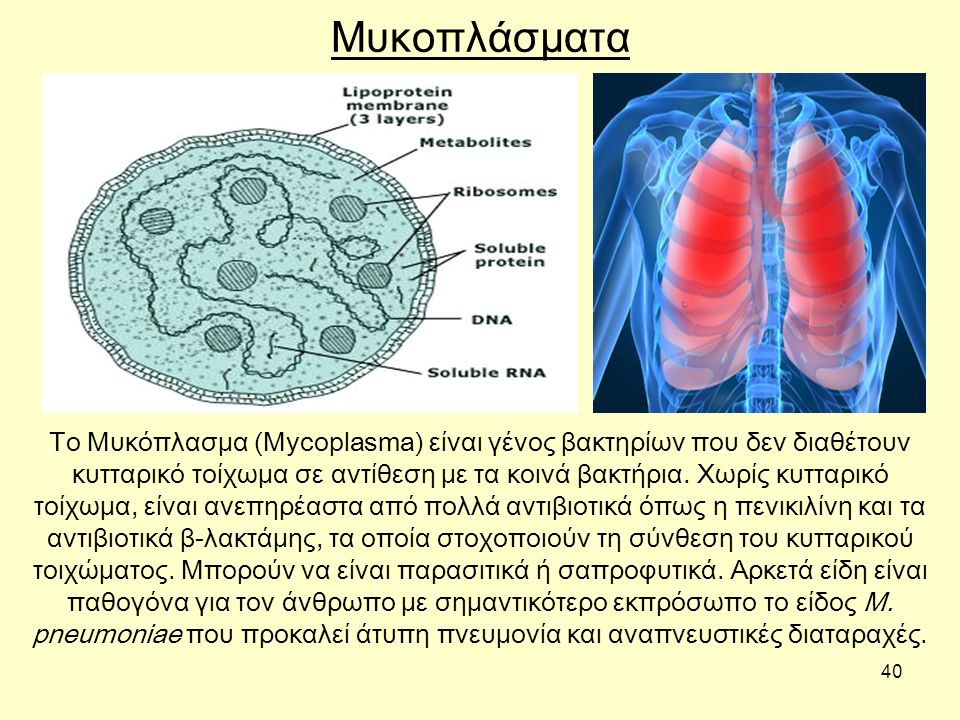 40 Μυκοπλάσματα Το Μυκόπλασμα (Mycoplasma) είναι γένος βακτηρίων που δεν διαθέτουν κυτταρικό τοίχωμα σε αντίθεση με τα κοινά βακτήρια. Χωρίς κυτταρικό