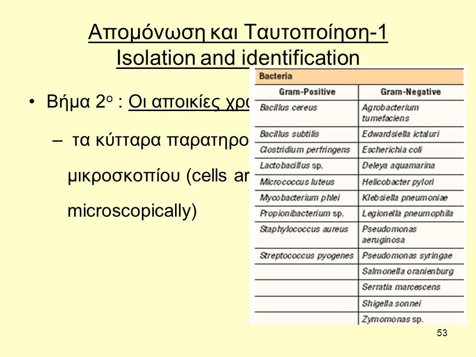 53 Απομόνωση και Ταυτοποίηση-1 Isolation and identification Βήμα 2 ο : Οι αποικίες χρωματίζονται κατά Gram – τα κύτταρα παρατηρούνται με τη βοήθεια μι