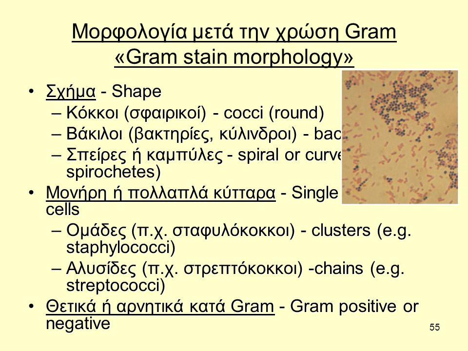 55 Μορφολογία μετά την χρώση Gram «Gram stain morphology» Σχήμα - ShapeΣχήμα - Shape –Κόκκοι (σφαιρικοί) - cocci (round) –Βάκιλοι (βακτηρίες, κύλινδρο
