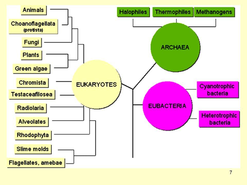 8 Προκαρυωτικά σε αντιδιαστολή με τα Ευκαρυωτικά κύτταρα Μη-διαμερισματοποιημέναΜη-διαμερισματοποιημένα Οι κυτταρικές μεμβράνες στερούνται στερολών (π.χ.