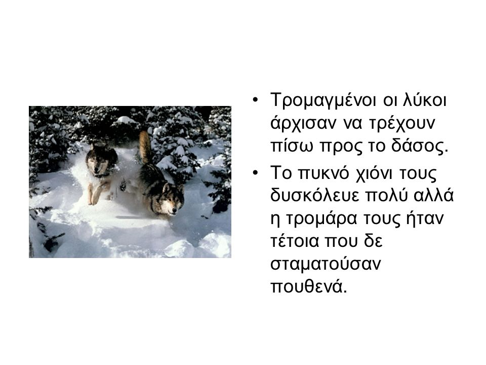 Τρομαγμένοι οι λύκοι άρχισαν να τρέχουν πίσω προς το δάσος.