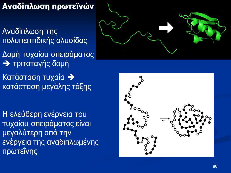 80 Αναδίπλωση πρωτεϊνών Αναδίπλωση της πολυπεπτιδικής αλυσίδας Δομή τυχαίου σπειράματος  τριτοταγής δομή Κατάσταση τυχαία  κατάσταση μεγάλης τάξης Η