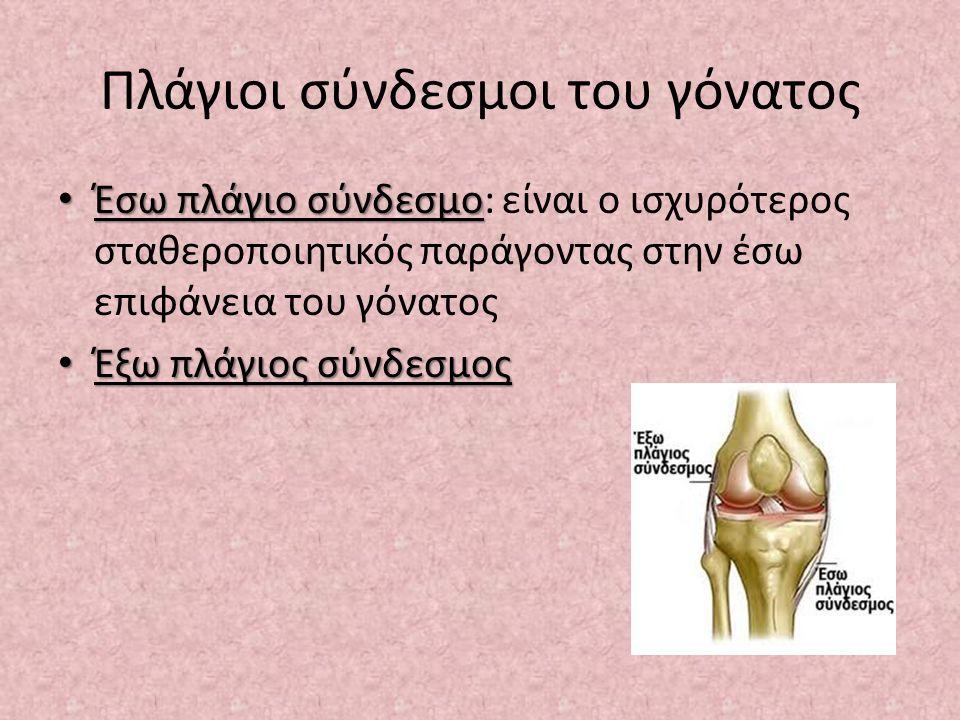 Πλάγιοι σύνδεσμοι του γόνατος Έσω πλάγιο σύνδεσμο Έσω πλάγιο σύνδεσμο: είναι ο ισχυρότερος σταθεροποιητικός παράγοντας στην έσω επιφάνεια του γόνατος Έξω πλάγιος σύνδεσμος Έξω πλάγιος σύνδεσμος