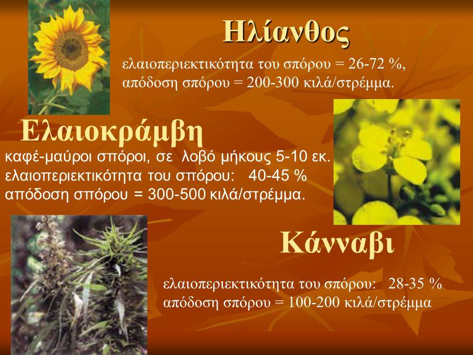 Γαϊδουράγκαθο Το λινάρι είναι ένα φυτό με μωβ-μπλε άνθη, το οποίο ανθίζει σε ολόκληρη την Ευρώπη.
