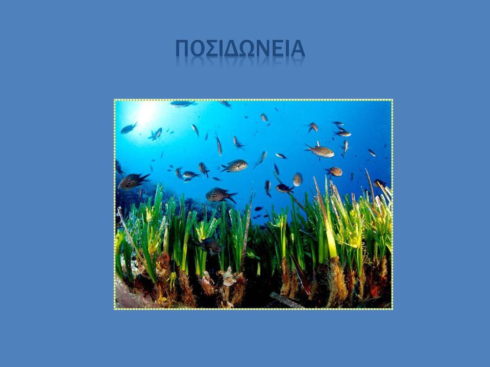 βιοποικιλότητα *Λιακόπουλος Σωτήρης *Ανδρέας Κακοταρίτης *Σάμπαλος Νίκος