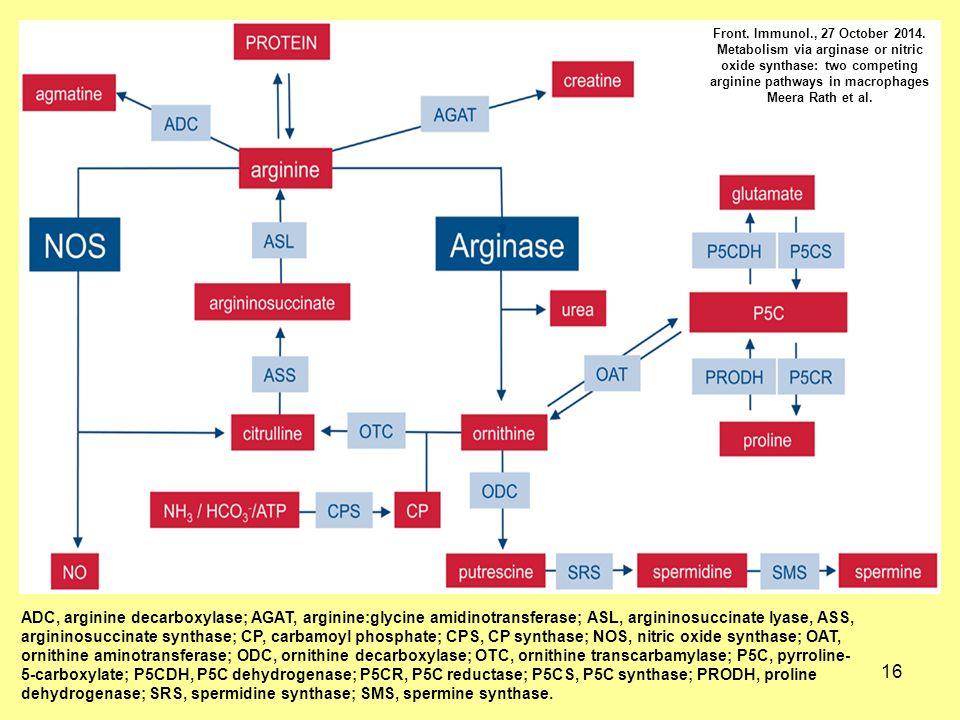 16 ADC, arginine decarboxylase; AGAT, arginine:glycine amidinotransferase; ASL, argininosuccinate lyase, ASS, argininosuccinate synthase; CP, carbamoyl phosphate; CPS, CP synthase; NOS, nitric oxide synthase; OAT, ornithine aminotransferase; ODC, ornithine decarboxylase; OTC, ornithine transcarbamylase; P5C, pyrroline- 5-carboxylate; P5CDH, P5C dehydrogenase; P5CR, P5C reductase; P5CS, P5C synthase; PRODH, proline dehydrogenase; SRS, spermidine synthase; SMS, spermine synthase.