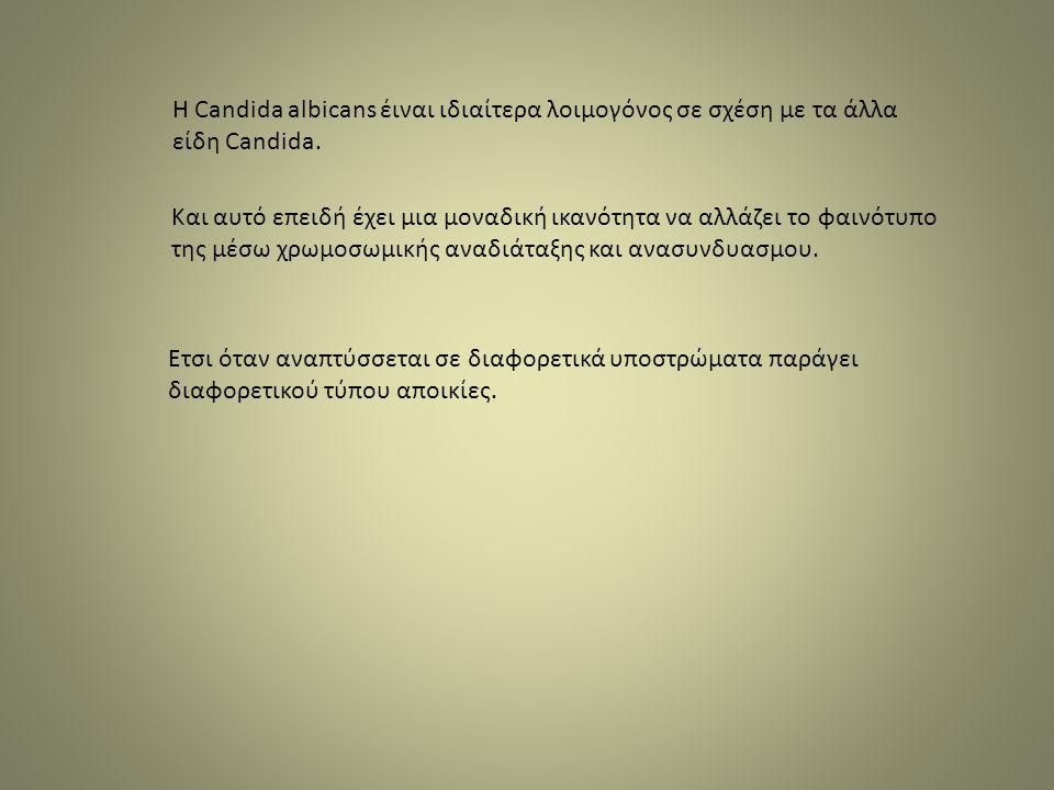 Η Candida albicans έιναι ιδιαίτερα λοιμογόνος σε σχέση με τα άλλα είδη Candida.