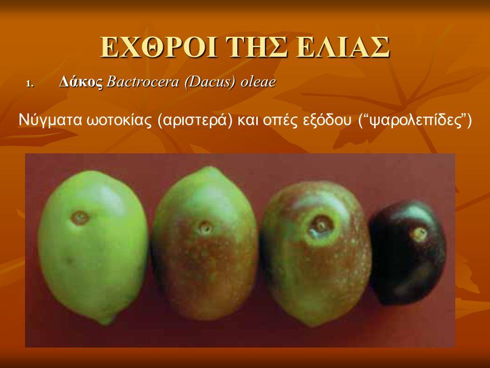 ΕΧΘΡΟΙ ΤΗΣ ΕΛΙΑΣ 1.