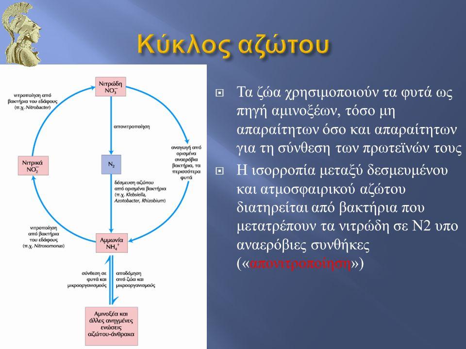  Τοσο η ουριδινυλίωση όσο και η αποουριδινυλίωση της ΡΙΙ επιτελούνται από το ένζυμο ουριδυλοτρανσφεράση  Η ουριδινυλίωση αναστέλλεται από την πρόσδεση γλουταμίνης στην ουριδυλοτρανσφεράση  Η ουριδινυλίωση διεγείρεται από την πρόσδεση α - κετογλουταρικού και ATP στην ουριδυλοτρανσφεράση