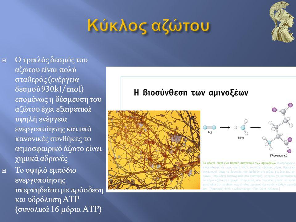  Η βιολογική δέσμευση του αζώτου επιτελείται από το σύμπλοκο της νιτρογενάσης  Το σύμπλοκο της νιτρογενάσης είναι ένα πρωτεινικό σύμπλοκο με κρίσιμα συστατικά την αναγωγάση της δινιτρογενάσης και τη δινιτρογενάση  Ηλεκτρόνια μεταφέρονται από το πυροσταφυλικό στη δινιτρογενάση μέσω της φερρεδοξίνης και της αναγωγάσης της δινιτρογενάσης