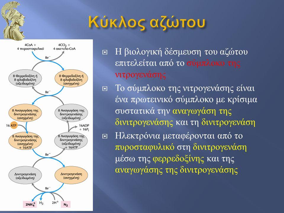  Η βιολογική δέσμευση του αζώτου επιτελείται από το σύμπλοκο της νιτρογενάσης  Το σύμπλοκο της νιτρογενάσης είναι ένα πρωτεινικό σύμπλοκο με κρίσιμα