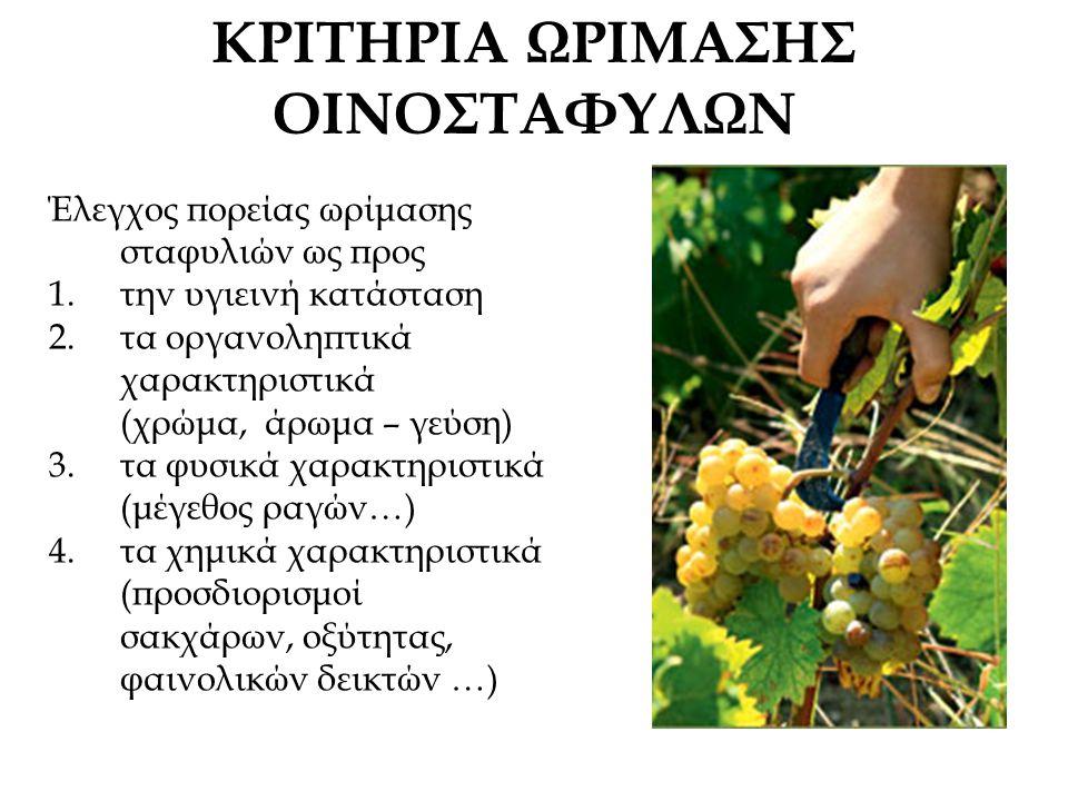 ΚΡΙΤΗΡΙΑ ΩΡΙΜΑΣΗΣ ΟΙΝΟΣΤΑΦΥΛΩΝ Έλεγχος πορείας ωρίμασης σταφυλιών ως προς 1.την υγιεινή κατάσταση 2.τα οργανοληπτικά χαρακτηριστικά (χρώμα, άρωμα – γεύση) 3.τα φυσικά χαρακτηριστικά (μέγεθος ραγών…) 4.τα χημικά χαρακτηριστικά (προσδιορισμοί σακχάρων, οξύτητας, φαινολικών δεικτών …)