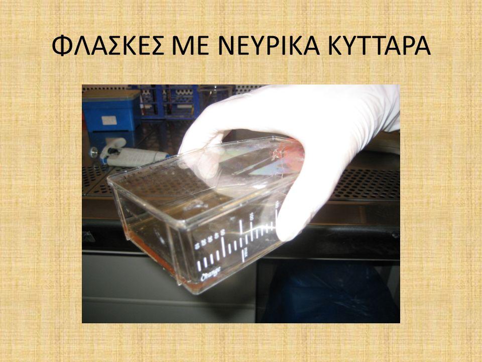 ΦΛΑΣΚΕΣ ΜΕ ΝΕΥΡΙΚΑ ΚΥΤΤΑΡΑ