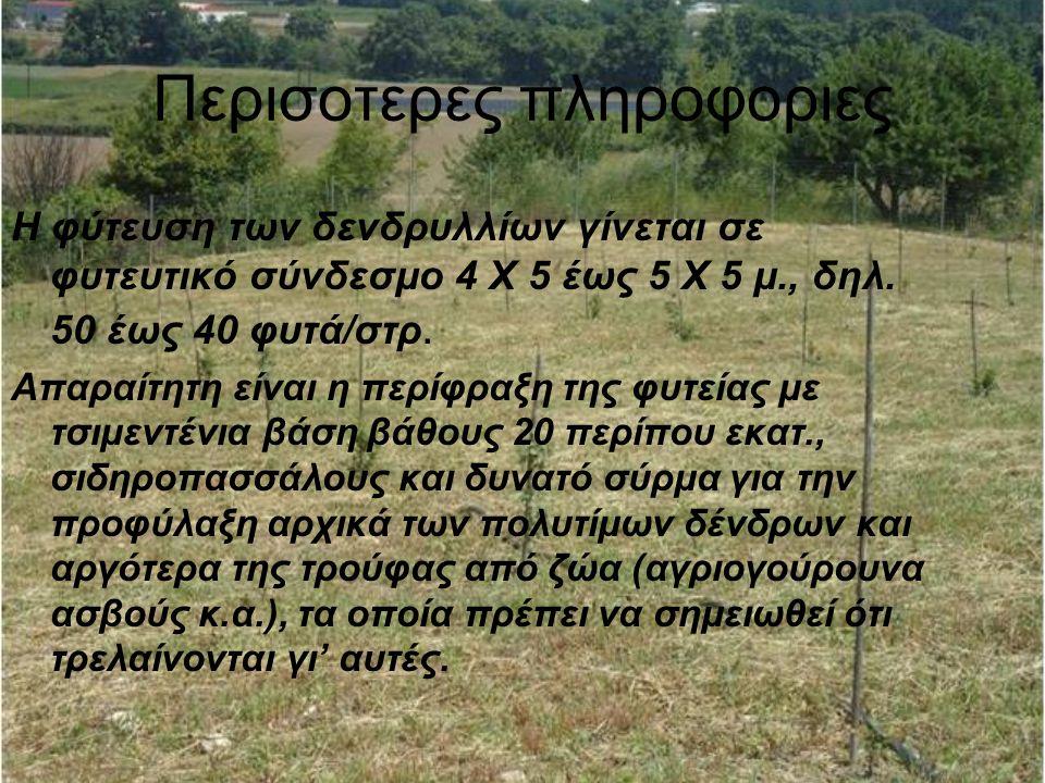 Περισοτερες πληροφοριες Η φύτευση των δενδρυλλίων γίνεται σε φυτευτικό σύνδεσμο 4 Χ 5 έως 5 Χ 5 μ., δηλ.